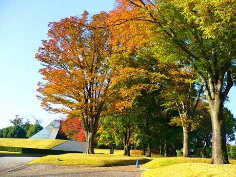 赤や黄に色づいた葉が秋の深まりを感じさせます。