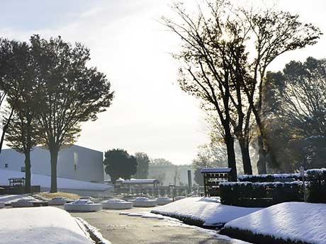 雪の朝、静寂が漂います。