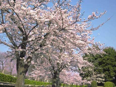 桜並木が園を彩る季節。